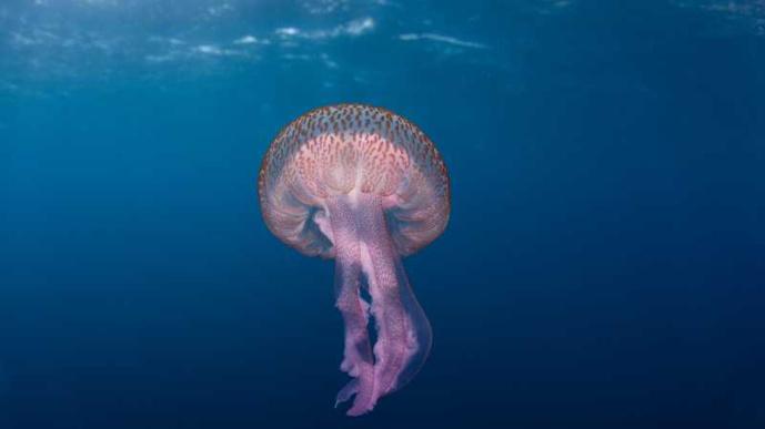 Soigner les piqûres de méduses